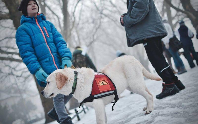 Dogoterapeuta, przewodnik psa wizytującego awolontariusz