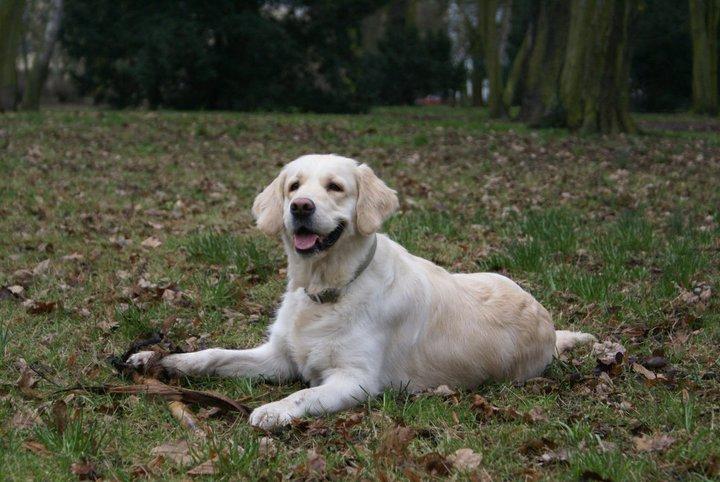 Poradnik przewodnika psa: bezpieczny spacer zpsem