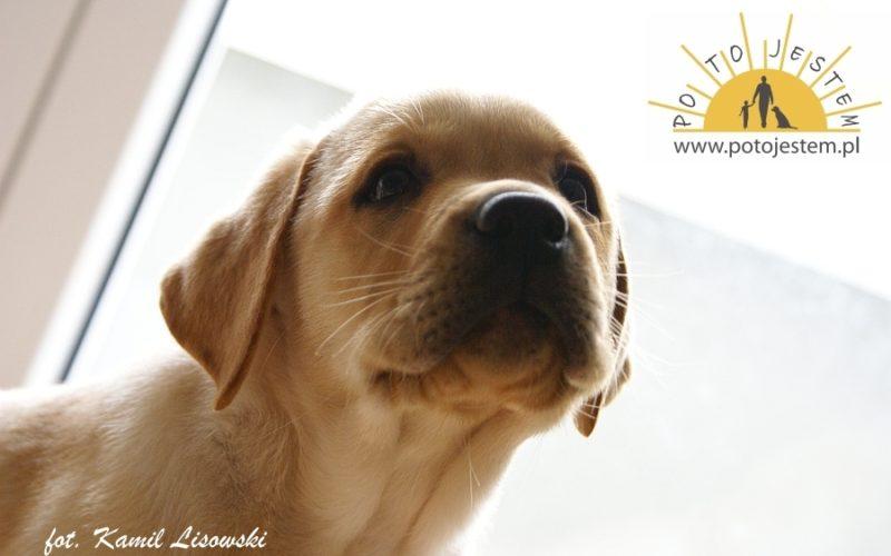 Pies dla rodziny, czypies dla dziecka?